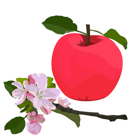 Red apple and branch in blossom, vector flat isolated illustration