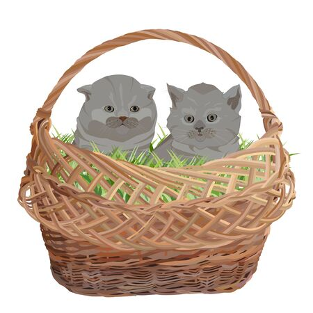 Two cute kittens sitting in wicker basket vector flat illustration