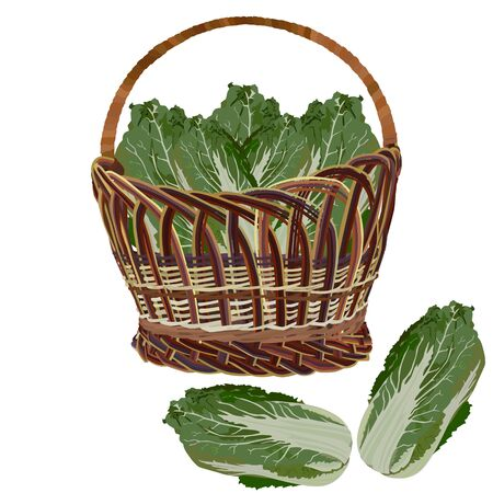 Wicker basket full of fresh chinese napa cabbage, vector illustration Illusztráció