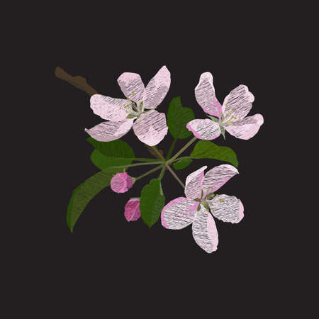 Apple blossom, embroidery, vector illustration on black background