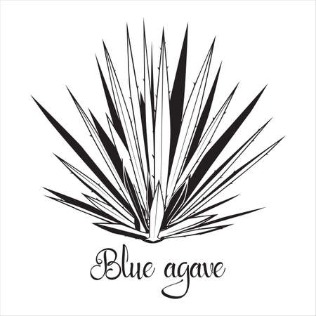 Tequila agave black silhouette. Vector illustration isolated on white background. Blue agave succulent plant stencil 向量圖像