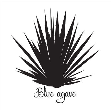 Tequila agave black silhouette. Vector illustration isolated on white background. Blue agave succulent plant