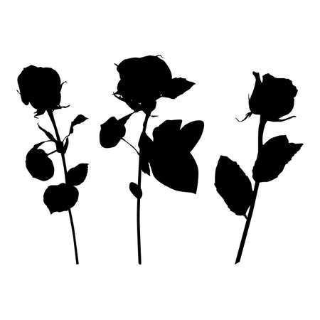 Rose flower black silhouette set, vector illustration. Blooming garden flower