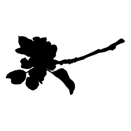 Apple tree branch in blossom silhouette, vector illustration. Apple tree twig.