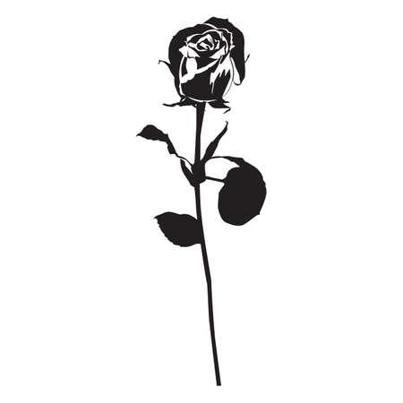 Rose flower black silhouette, vector illustration. Blooming garden flower