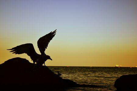Dark Seagull Against the Twilight Sky