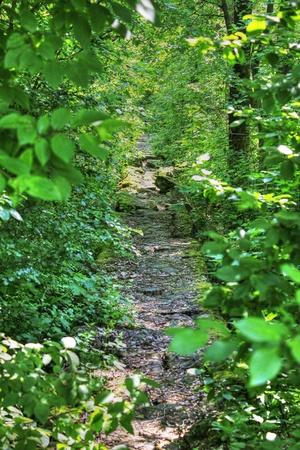 rock path to wilderness Banco de Imagens