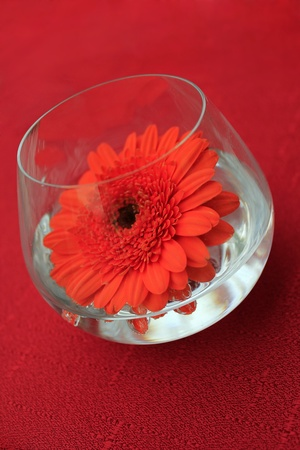 table decoration, red flower Stock Photo