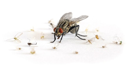 criminal act: terror big flesh-fly