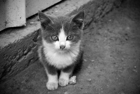 unprotected: Stray unprotected kitten on backyard. B&W