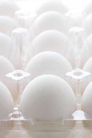 Rows of white chicken eggs in plastic box. photo