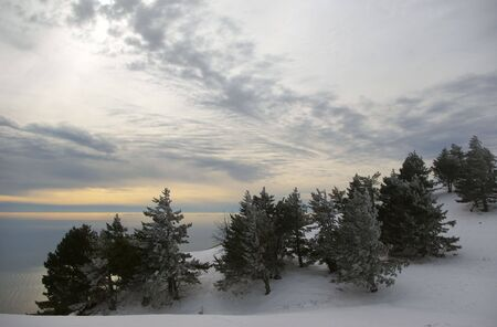 Winter mountain landscape with snow, pines and clouds. photo