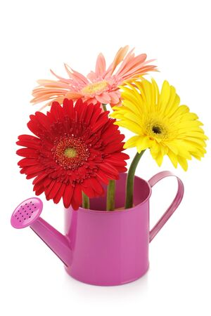 Pink watering can with colorful gerberas isolated on white background. photo