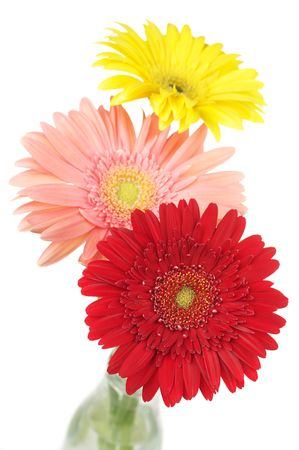 Three colorful gerberas in glass bottle isolated on white background. photo