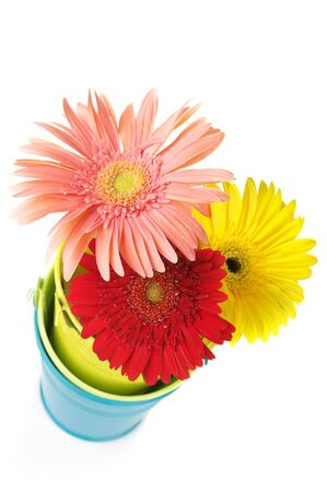 Three colorful gerberas in colorful buckets isolated on white background. Stock Photo - 7547774