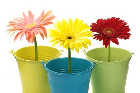 Three colorful buckets with gerberas on white background. Stock Photo - 8250574