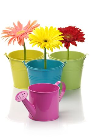 watering can: Three colorful buckets with gerberas and watering can isolated on white background.