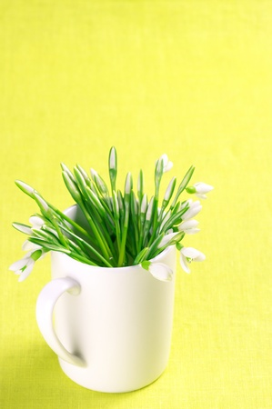 Bouquet of fresh snowdrops in white mug on yellow background. photo