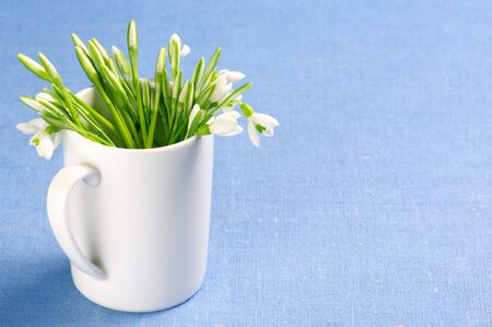 Bouquet of fresh snowdrops in white mug on blue background. photo