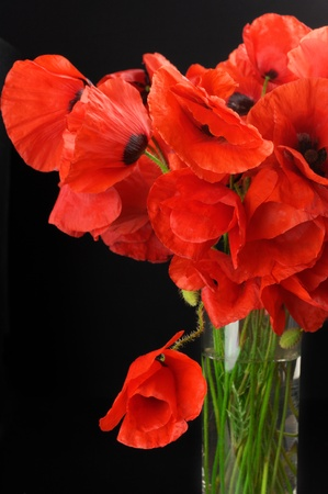 Bouquet of poppies in glass vase on black background. Stock Photo