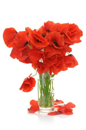 Bouquet of poppies in glass vase isolated on white background. photo