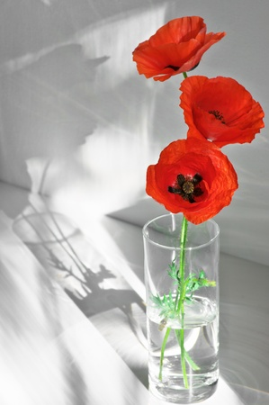 Three poppies in glass vase with sunlight and shadows on light background. Stock Photo