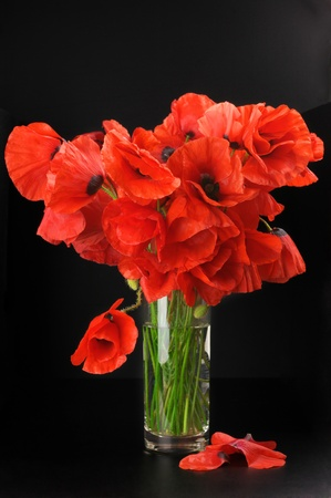Bouquet of poppies in glass vase on black background. photo