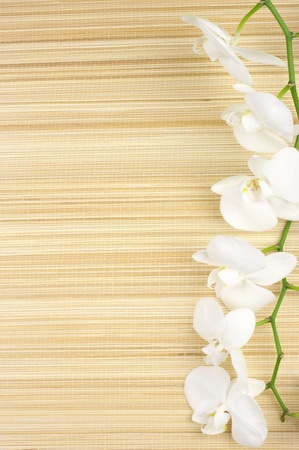 Branch of white orchid on mat as border. Stock Photo