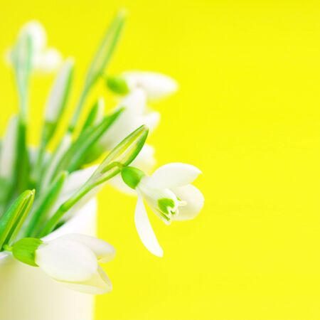 Close-up of snowdrops in vase on yellow background with copy space. photo
