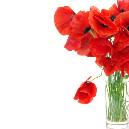Bunch of poppies in vase on white background with copy space. photo