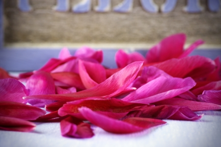 Close-up of fallen peony petals. Stock Photo - 20232553