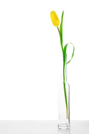 Yellow tulip in glass vase on white background. photo