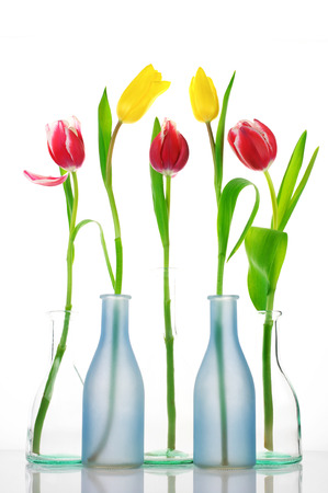 Red and yellow tulips in glass vases on white background. photo