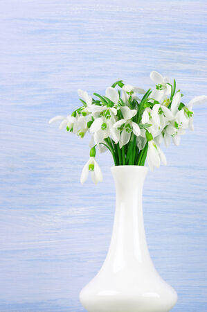 Snowdrops in white vases on blue wooden background. photo