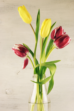Red and yellow tulips on vintage wooden background. photo