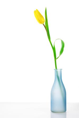 Yellow tulip in blue vase on white background. photo