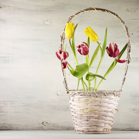 Red and yellow tulips in basket on vintage wooden background. photo