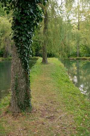 Calm pond with willows and reflection. photo