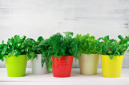 flavoring: Bunches of flavoring greens, lettuce and spinach in colorful metallic buckets on rustic wooden background. Stock Photo