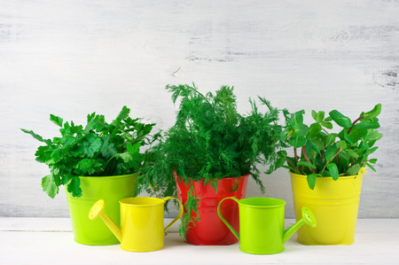 Bunches of flavoring greens in colorful metallic buckets and watering cans on rustic wooden background. photo