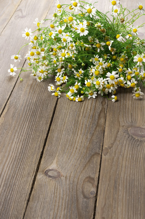 chamomiles: Wild chamomiles bouquet lying on wooden background.
