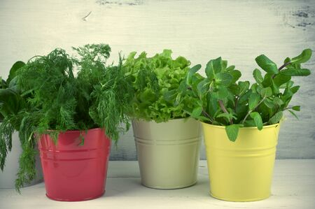 flavoring: Bunches of flavoring greens and lettuce in colorful metallic buckets on rustic wooden background. Toned image.