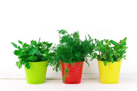 flavoring: Bunches of flavoring greens in colorful metallic buckets on white wood against white wall.