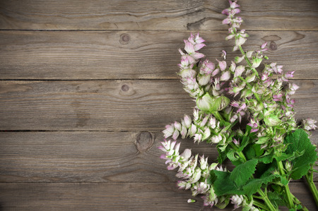 medicinal herbs: Sage bouquet lying on wooden background. Stock Photo
