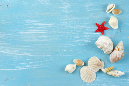 Assorted seashells collection on blue wooden background. photo