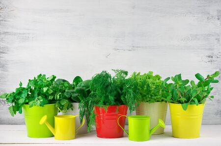 flavoring: Bunches of flavoring greens, lettuce and spinach in colorful metallic buckets with watering cans on rustic wooden background. Stock Photo