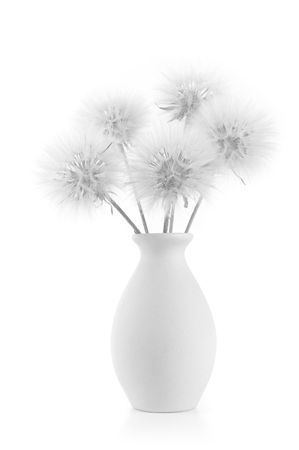 high key: Bouquet of fluffy dandelions in vase isolated on white background. Black and white image, high key.