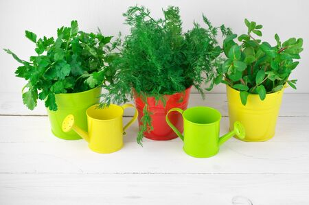 flavoring: Bunches of flavoring greens in colorful metallic buckets and watering cans on white wood against white wall.
