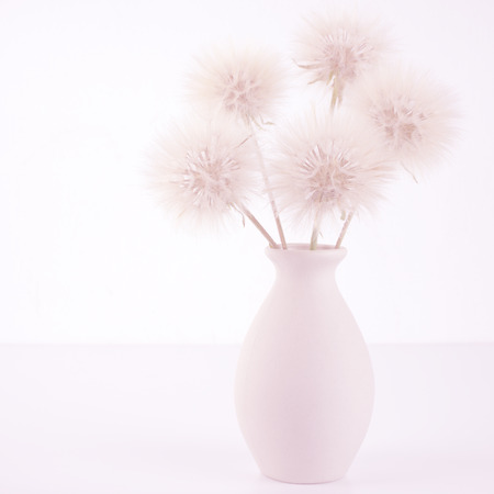 high key: Bouquet of fluffy dandelions in vase on light background (non isolated). Pink toned image, high key. Stock Photo