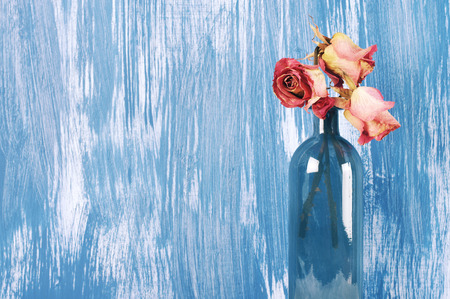 decorative wall: Dried pink roses in blue glass bottle against blue rustic painted wall. Stock Photo